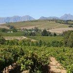 Beautiful Vineyard View