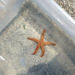 Star Fish caught by tour mates