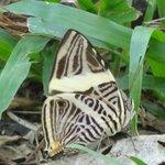 Flora y Fauna en Bahía Ballena