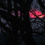 Sunset through the Oak Tree