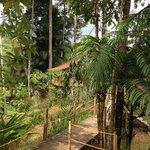 Hut in the jungle