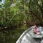 Manglar de Tuba Creek