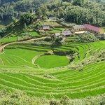 Sapa : rizières en terrasses