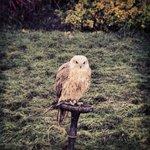 Like a hawk...