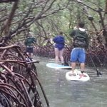 exotic mangrove tunnels