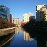 Meguro River in the morning