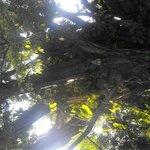 Sun peeking through lush canopy of trees