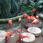 Flamingo town
