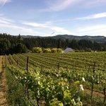 Vineyard with Mt Hood in distance
