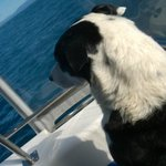 """Rastus, the """"First Mate"""" and Dolphin Spotter"""