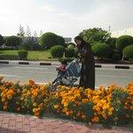 Blossoms of Katara