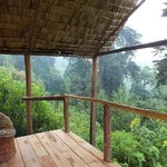 Balcony and the Forest.