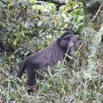 Blue Monkeys are regular visitors.