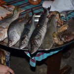 Fresh fish to choose from daily- red snapper, shark, sea bass, barracuda, tiger prawn