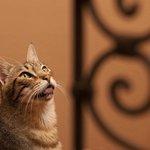 Riad cat