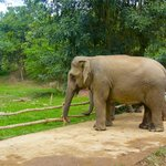 Photo de Boon Lott's Elephant Sanctuary