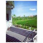 rice padi view