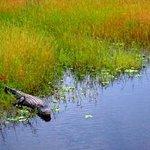 Gators all around, no swimming huh?