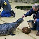 samen de zeehondjes eten geven