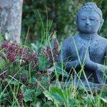 Un Bouddha dans le jardin