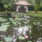Pond with lotus