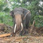 прогулка на слониках
