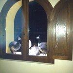 I pavoni ospiti dell albergo