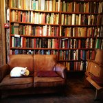 Reading room upstairs with the resident white cat.