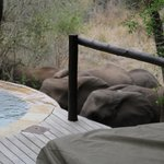 Elephants drinking from Cabin #5's plunge pool