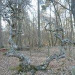 Forêt de Verzy