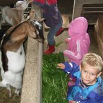 Ziegen beim Füttern