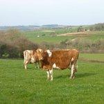 Drysdale Farm