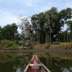 Los manglares de churute, Monoloco