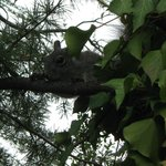 Yosemite Gateway Inn Squirrel