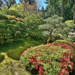 Another carefully pruned tree in the Portland Japanese Gardens