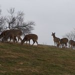Around 6:45 p.m. about 10 deer - right beside the private road that leads to the Windermere hote