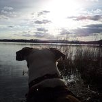 our dog at Lake Menteith
