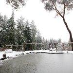 snowy pond scene