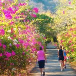 Flower-lined Laneway to Rancho Armadillo