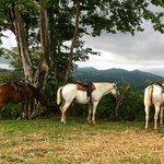 Horses taking a break from ride