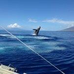 A Whale Breach