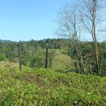 Vista del camino a Selva Bananito