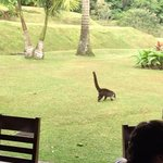 monkey's visiting during breakfast