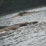croc spotting