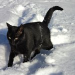 unsere Katze Jerry