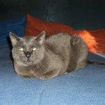 unsere Katze Cherry