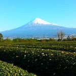 富士山と茶畑宿から綺麗な富士山が見れます。