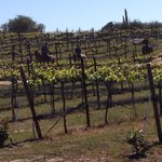 What a breath taking experience through the vineyards of Milagro farm vineyards and winery!