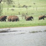 Elephants by the water hole
