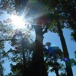L'albero sacro a tutti (islamici/ cattolici/ anglicani ecc..)